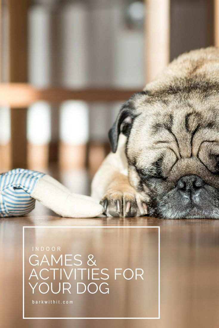 dog game and activities indoor