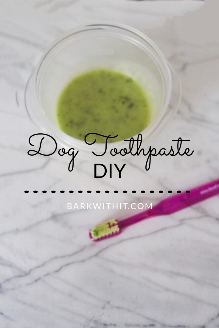 dog toothpaste DIY