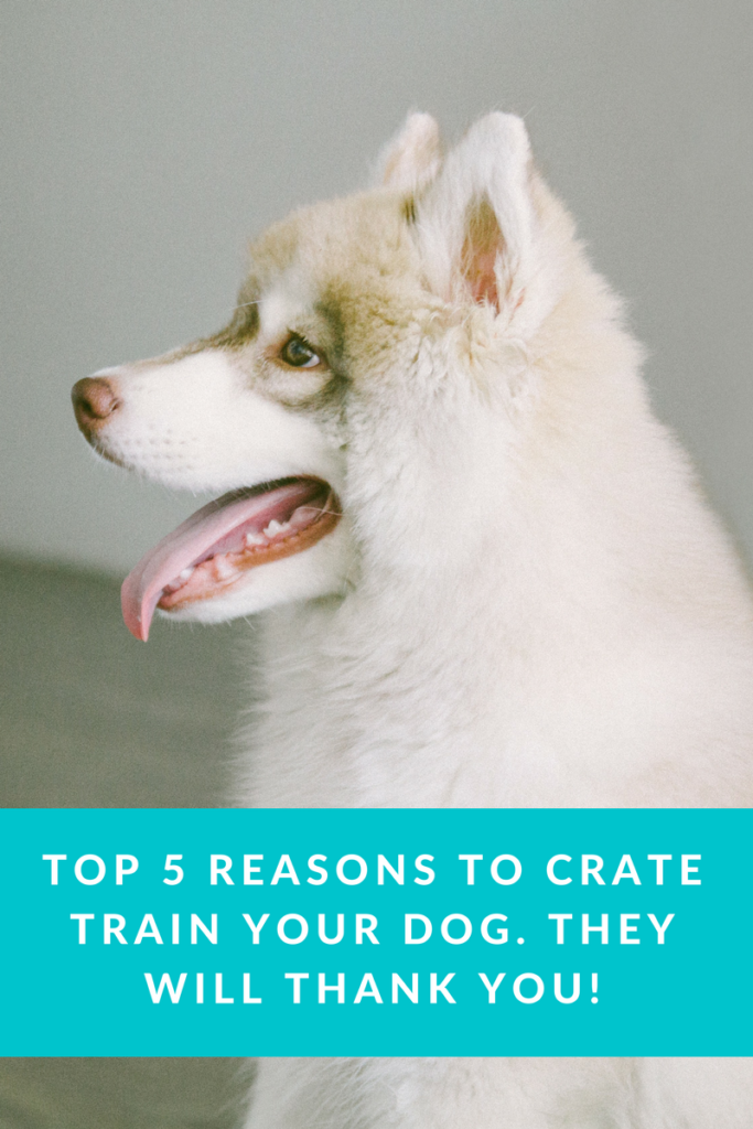 5 Best Reasons to Crate Train Your Dog