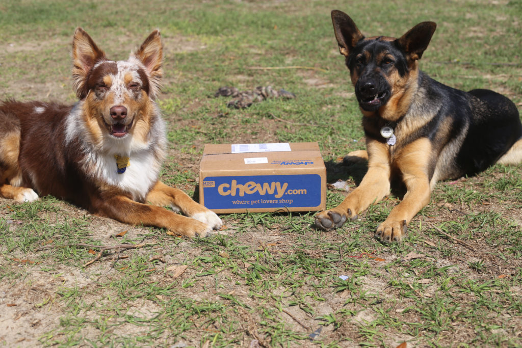 chewy influencer barkwithit