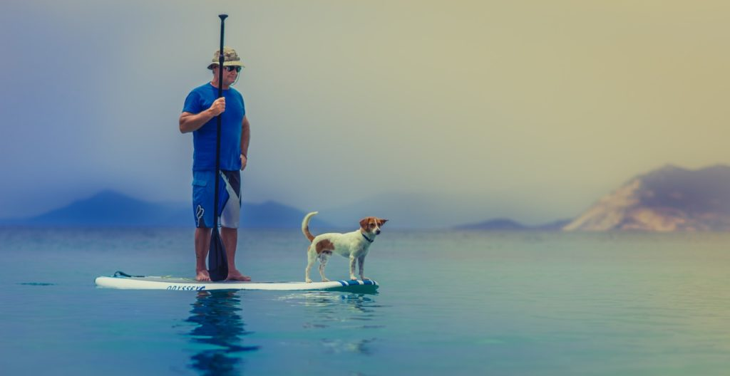 5 amazing ideas dog bucket list paddle boarding