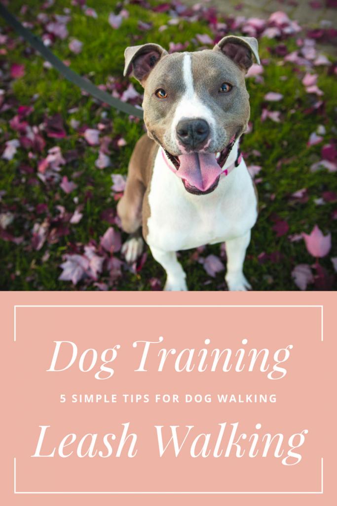5 Simple Dog Walking Tips