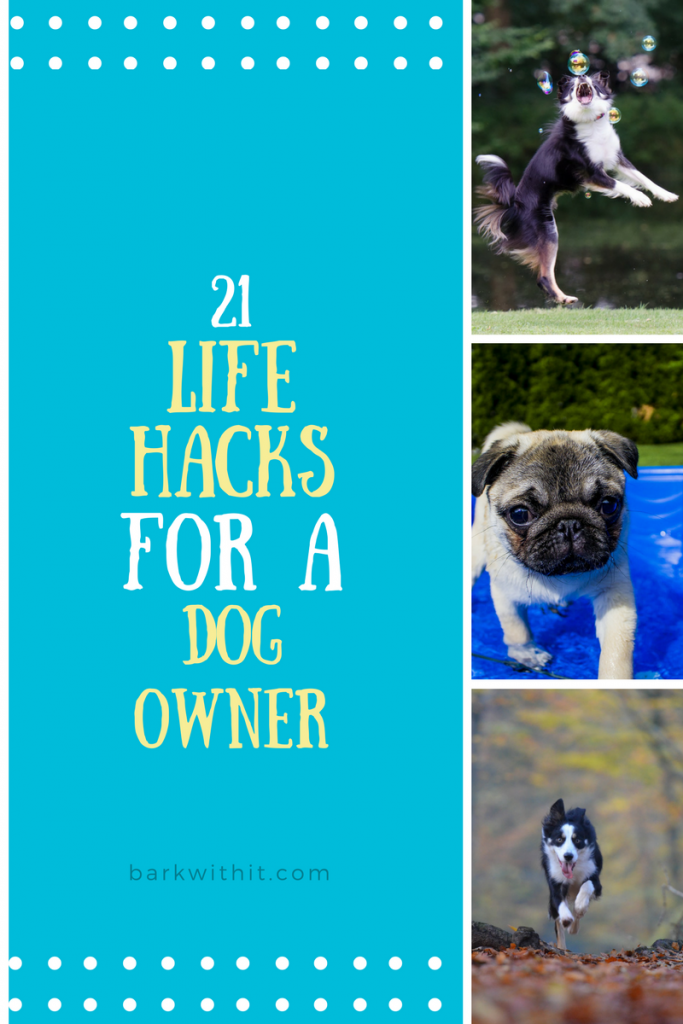 25 Life Hacks for Dog Owners