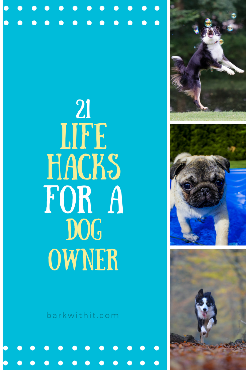 dog hacks, life hacks for dog owners