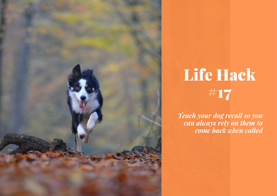 life hacks, dog hacks, dog life hacks, life hacks for dog owners, dog recall