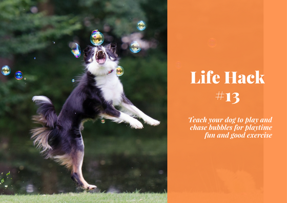 life hack, dog hack, bubbles