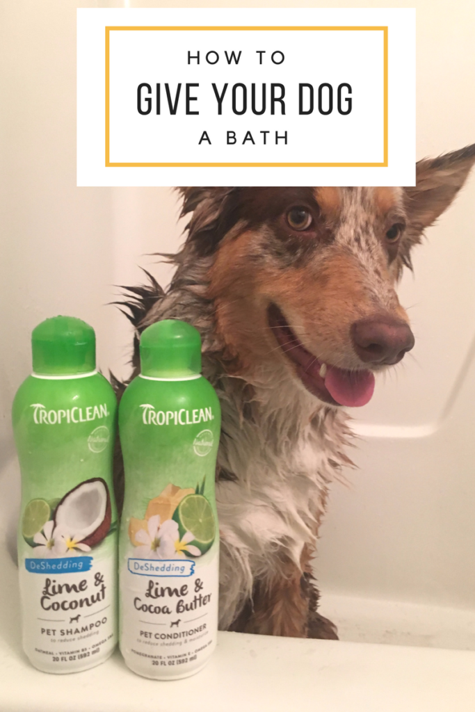 Dog Baths – Tips and Tricks for Grooming