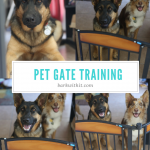 pet gate training,