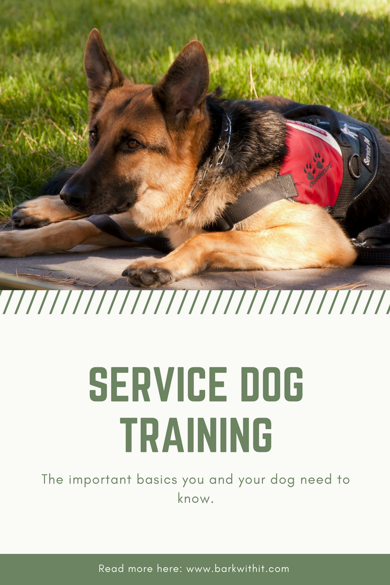 Training Requirements For A Service Dog