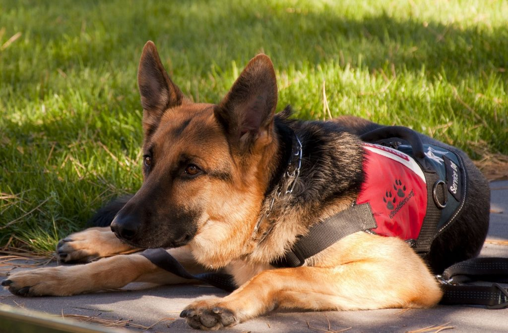 service dog, service dog training