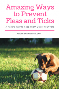 Prevent ticks and fleas naturally