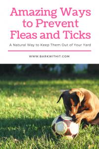 Prevent ticks and fleas naturally