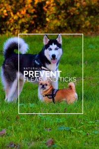 prevent ticks, prevent fleas and ticks naturally