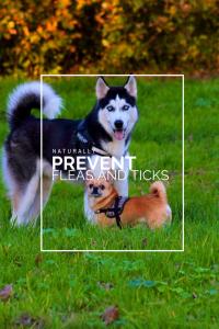 prevent ticks, prevent fleas and ticks naturally