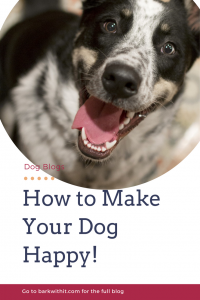 dog happy, how to make your dog happy