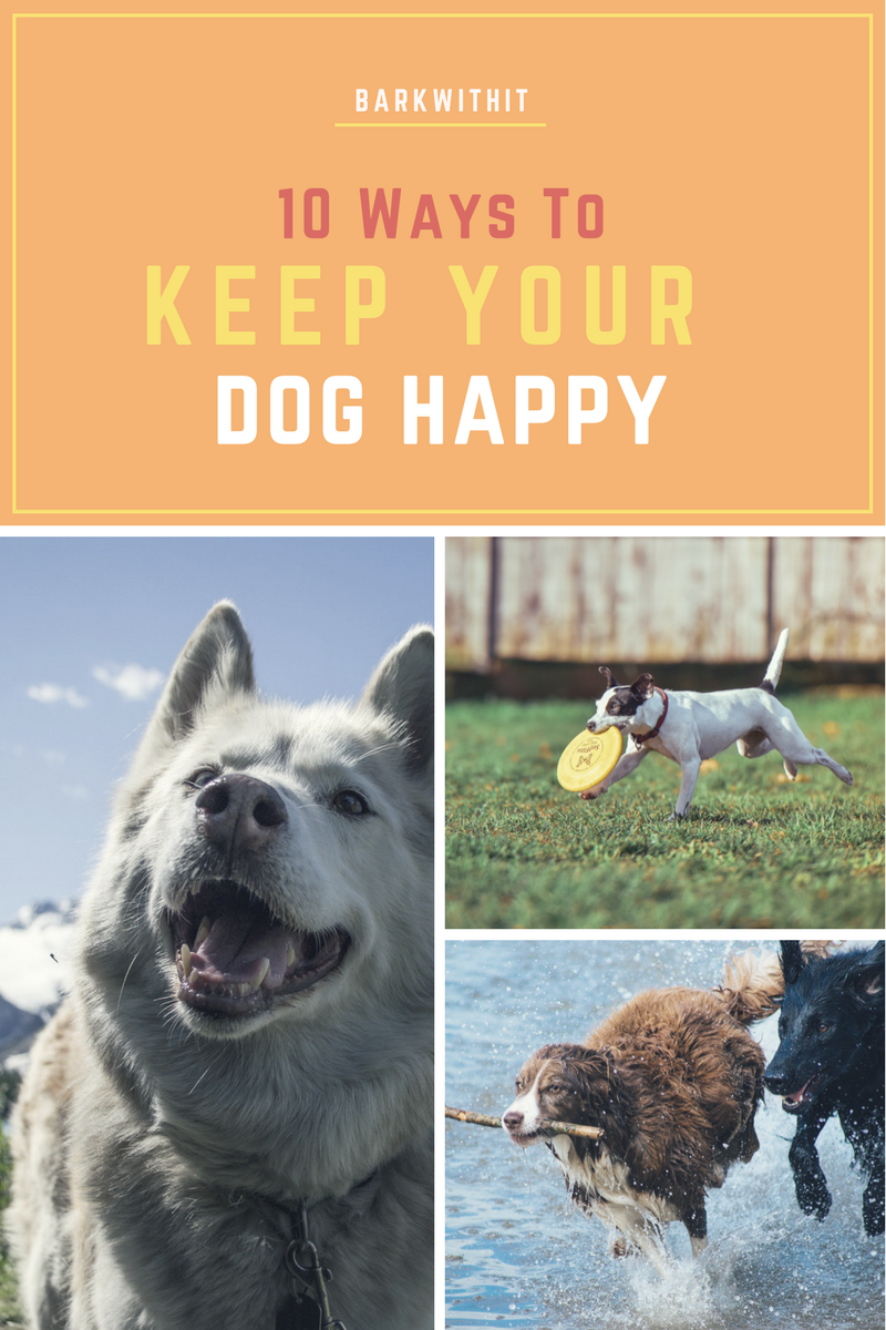 dog happy, keep your dog happy