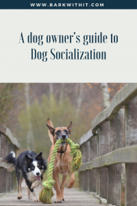 Dog Socialization Guide for pet woners