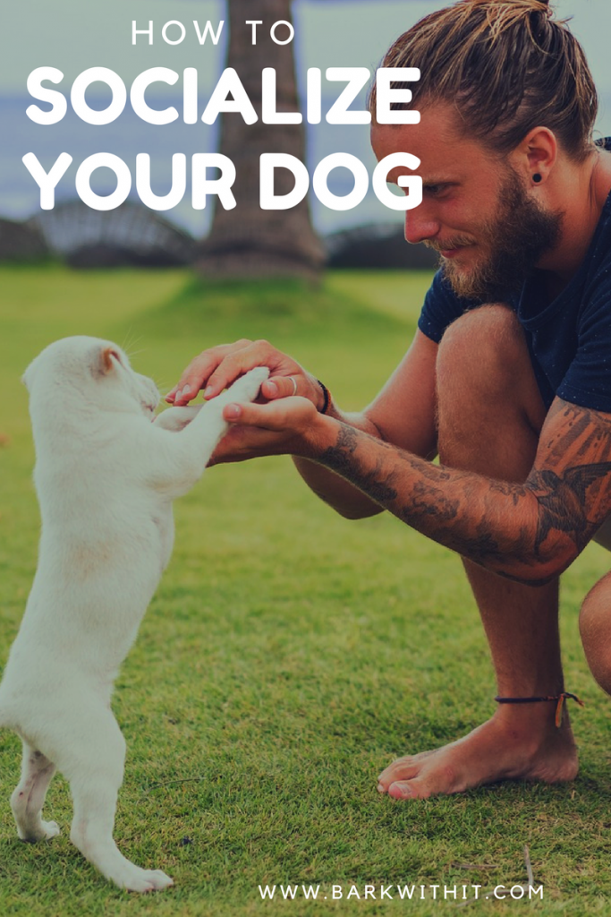 How to Socialize your dog tips and tricks