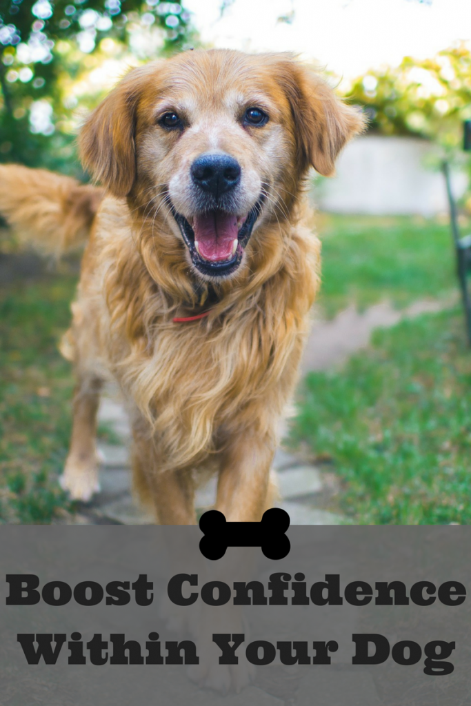 boost confidence in your dog / essential commands for your dog