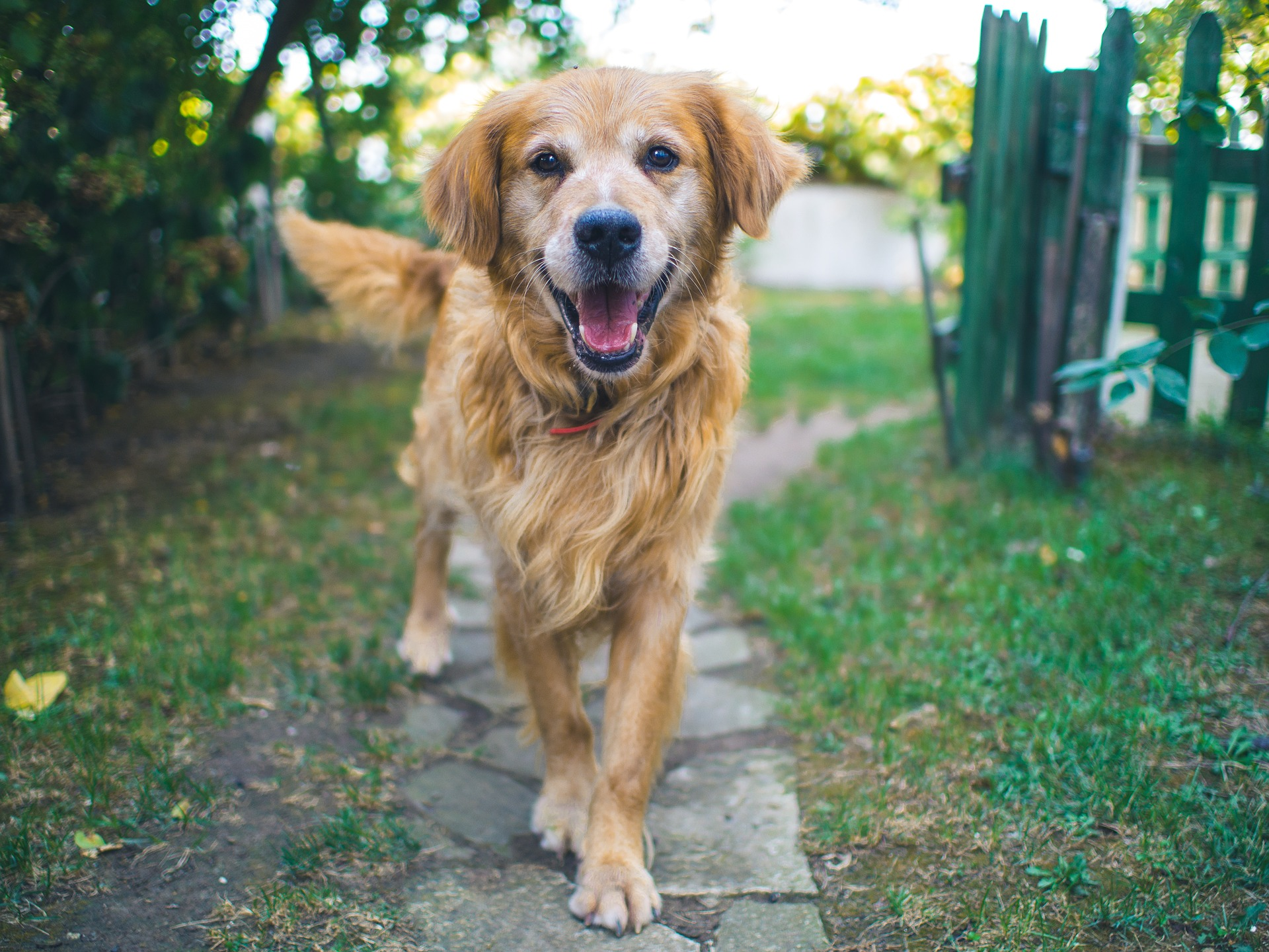 Boost confidence within your dog