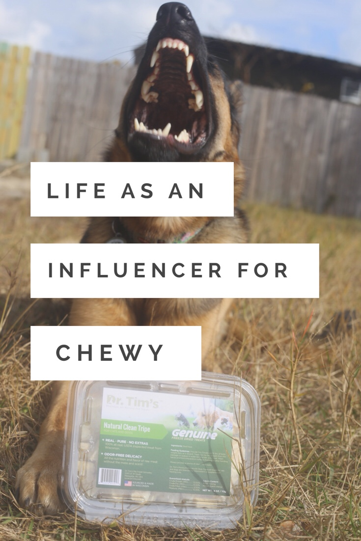 Chewy Influencer
