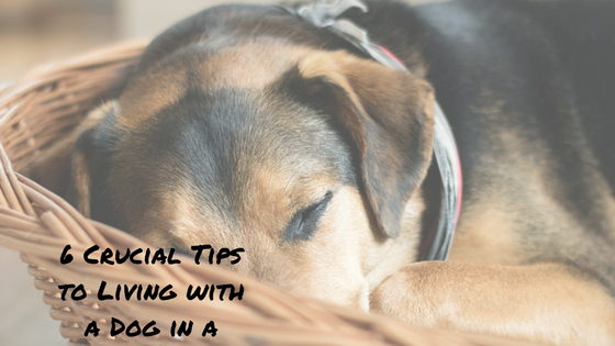 6 Crucial Tips To Survive A Small Apartment With Dog