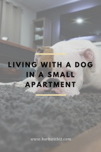 small apartment with a dog