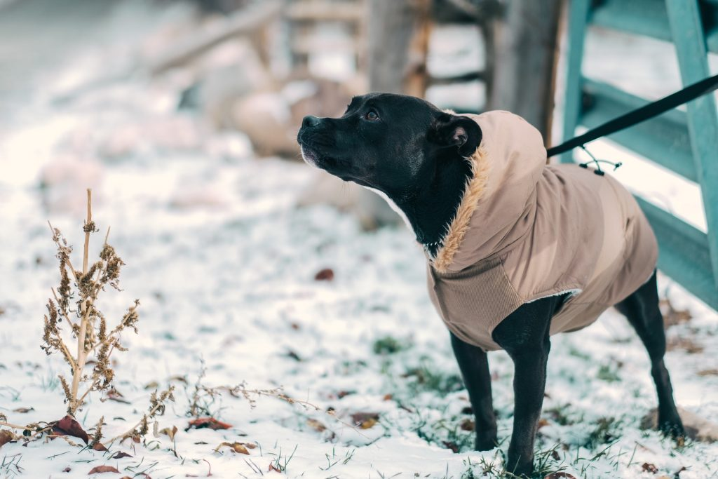 safely walk your dog in winter