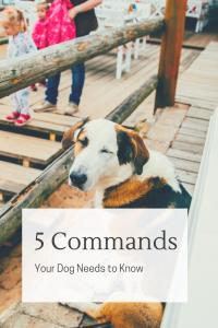 5 commands