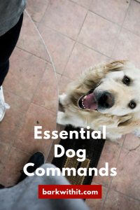 5 commands to teach your dog
