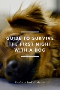 puppy's first night