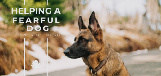 Helping a fearful dog with music, helping a nervous dog, helping an anxious dog