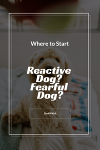 Help a reactive dog or fearful dog, where to start helping a reactive dog