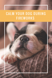 Calm your dog during thunderstorms and fireworks