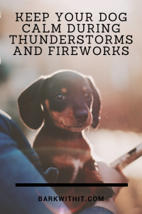 calm your dog during fireworks and thunderstorms