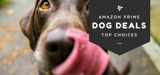 amazon prime day dog deals
