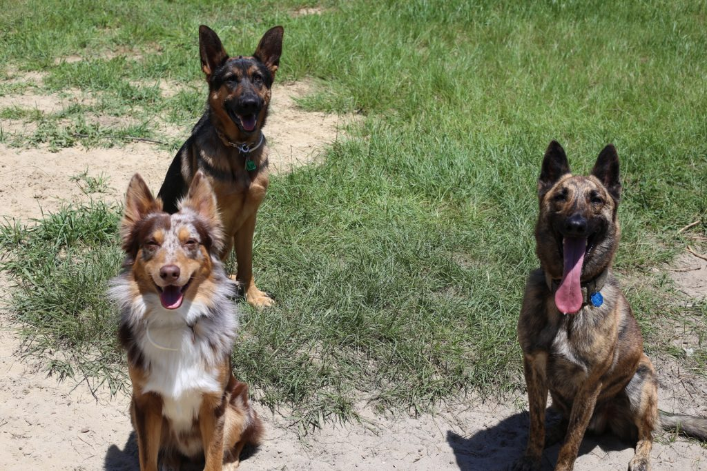 Life with three dogs - high energy dog breeds