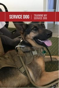 Training My Service Dog