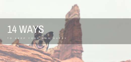 Ways to Keep Dog Happy