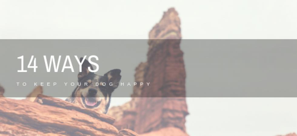 Ways to Keep Dog Happy