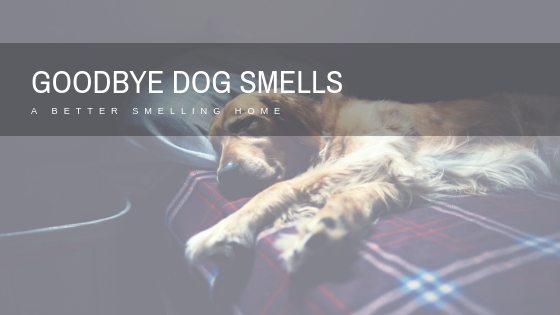 No More Smelly House from Dogs