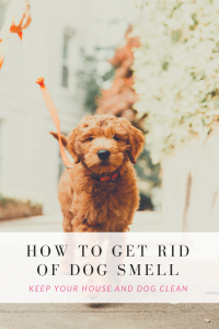 Get Rid of Dog Smell