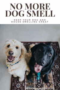 No More Dog Smell in Your Home