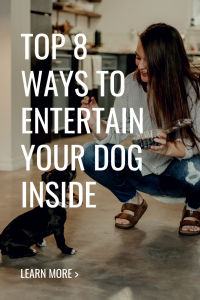 top ways to keep your dog entertained inside