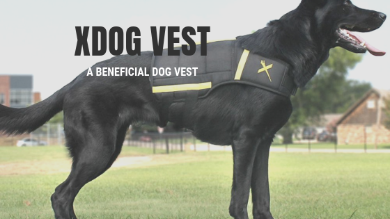 xdog weighted fitness vest