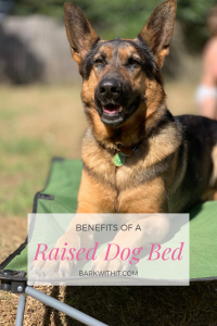 Benefits of a Raised Dog Bed Carlson Pet Products Dog Cot A German Shepherd on a large green portable dog cot