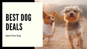 Sales at Chewy Dog Food and Dog Treat Sales at Chewy are happening now! Buy 2 Get 1 Free Treats and Chews $10 off 3 bags of True Acres Dog Food