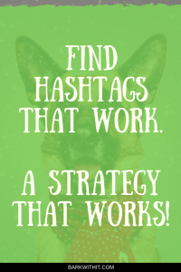 Dog Hashtags Find Hashtags to Grow on Instagram Dog Hashtag Finder Instagram Hashtag Strategy