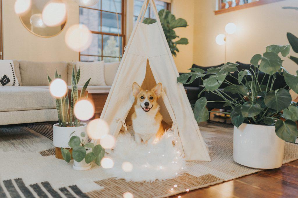 Dog Hashtag Finder Dog Hashtags for Instagram Corgi Instagram Hashtag