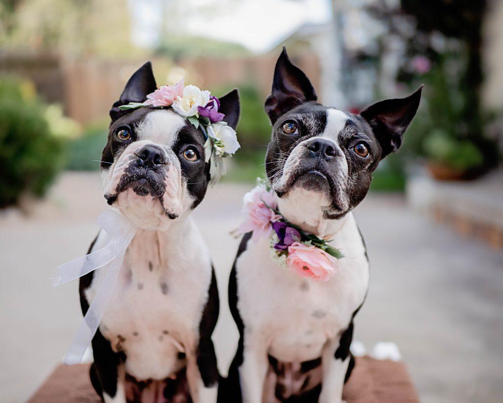 MaggieLovesOrbit Maggie Loves Orbit Dog Hashtags for Instagram Dog Hashtag Finder